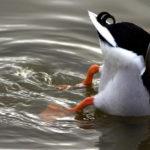 birdo4